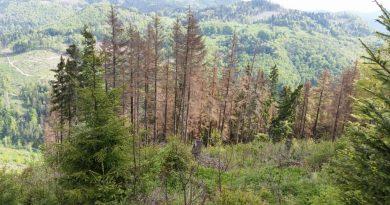 Dobšinské lesy sužuje rozšírený problém